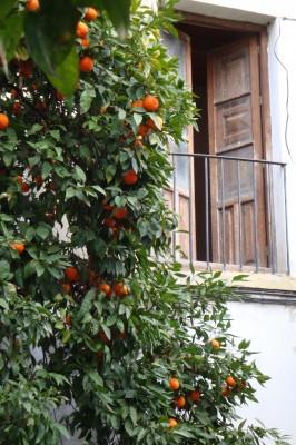 Sara Naumann blog photo friday orange tree
