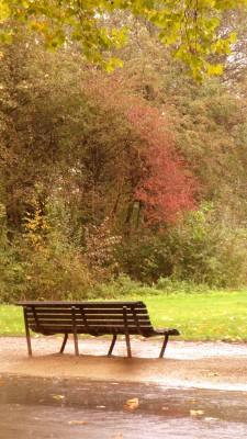 Sara Naumann blog Photo Friday Vondelpark bench