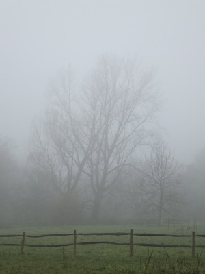 Sara Naumann blog photo Friday misty tree
