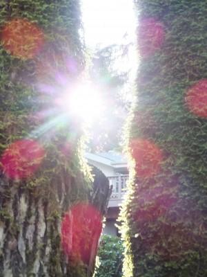 Sara Naumann blog sun and trees photo Friday