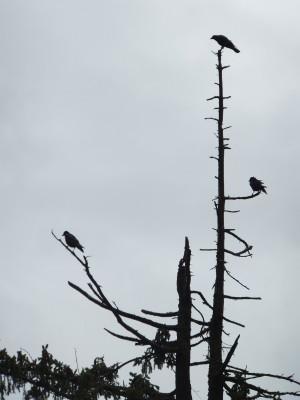 Sara Naumann blog birds