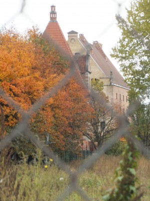 Sara Naumann blog photo friday autumn leaves