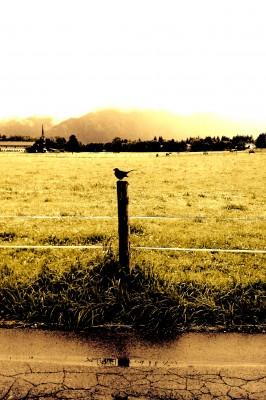 Sara Naumann blog photo friday