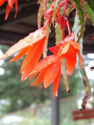 Sara Naumann flower photo