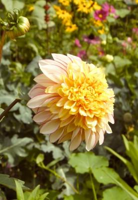 Sara Naumann blog last flower