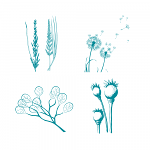 Screen Sensation Seed Pods